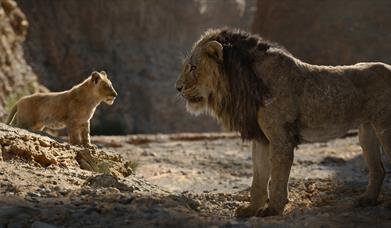 Family Film Club: The Lion King